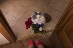 O gato trouxe rosas como um presente a sua mamã Fotografia de Stock