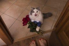O gato trouxe rosas como um presente a sua mamã Fotografia de Stock Royalty Free