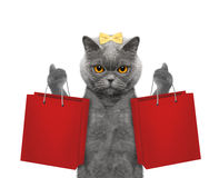 O gato vai comprar Imagem de Stock
