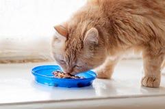 O gato vermelho come o alimento Fotografia de Stock