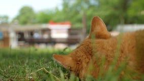 O gato vermelho desabrigado encontra-se na grama verde e olha-se os transeuntes que são fora de foco no primeiro plano opinião tr vídeos de arquivo
