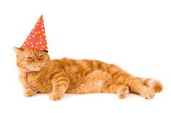 O gato vermelho doméstico está tendo um partido fotos de stock