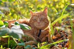 O gato vermelho encontra-se na folha amarela do outono imagens de stock