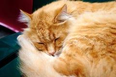 O gato vermelho está dormindo docemente no tamborete imagens de stock