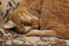 O gato vermelho está dormindo Vista com um olho Close-up fotografia de stock royalty free