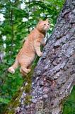 O gato vermelho está no tronco de uma árvore foto de stock