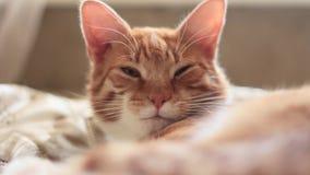 O gato vermelho está olhando de sobrancelhas franzidas e está piscando filme