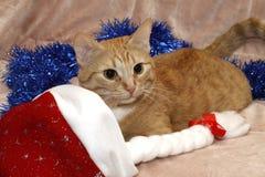 O gato vermelho está preparando-se pelo ano novo imagens de stock