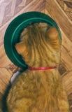 O gato vermelho home come o alimento Foto de Stock Royalty Free
