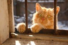 O gato vermelho olha à casa através de uma janela Fotos de Stock