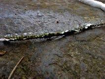 O gelo cobriu o galho Foto de Stock