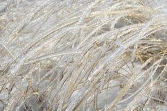 O gelo de brilho cobriu as lâminas na neve Fotografia de Stock