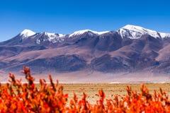 O Gelsemium elegan está em toda parte montanha abaixo Neve-tampada Imagem de Stock Royalty Free