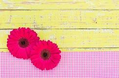 O gerbera cor-de-rosa da margarida floresce a decoração para um cumprimento ou um fundo do vale-oferta Foto de Stock