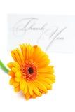 O Gerbera e o cartão assinados agradecem-lhe Fotos de Stock Royalty Free