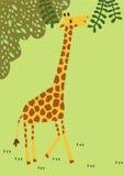 O girafa longo do pescoço tem engraçado a viajar em torno da floresta que profunda o animal largo de África se torna aos desenhos Fotos de Stock