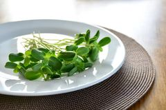 O girassol fresco verde brota - o conceito para a nutrição saudável, c imagens de stock royalty free