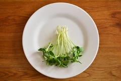 O girassol fresco verde brota - o conceito para a nutrição saudável, c fotos de stock