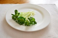 O girassol fresco verde brota - o conceito para a nutrição saudável, c foto de stock royalty free