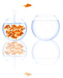 O Goldfish salta Imagem de Stock