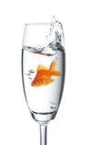 O Goldfish saltou em um vidro fotografia de stock
