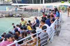 O golfinho de espera dos povos intitulados mostra na aventura do oceano de Subic Fotografia de Stock