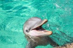 O golfinho de riso imagens de stock royalty free