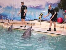 O golfinho joga bolas com o instrutor no dolphinarium de Rostov Foto de Stock Royalty Free