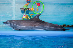 O golfinho no golfinho joga com uma bola imagens de stock