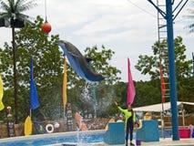 O golfinho salta fotografia de stock royalty free