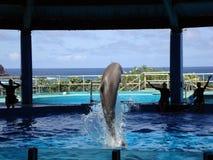 O golfinho salta no ar do tanque de água durante a mostra Imagens de Stock Royalty Free