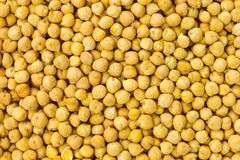 O grão-de-bico semeia o fundo ou o alimento cru da textura Imagens de Stock