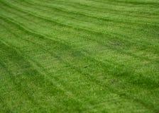 O gramado Imagem de Stock Royalty Free