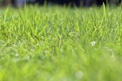 O gramado fresco na manhã Imagem de Stock