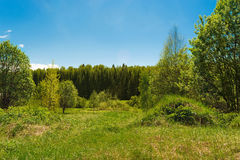 O gramado no monte nas madeiras Imagem de Stock