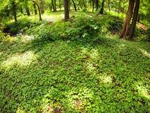 O gramado verde em um parque na máscara das árvores imagens de stock