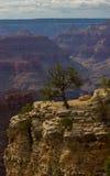 O Grand Canyon Imagens de Stock