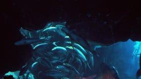 O grande rebanho dos peixes no aquário na alameda de Dubai armazena o vídeo da metragem vídeos de arquivo