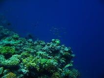 O grande recife de barreira foto de stock