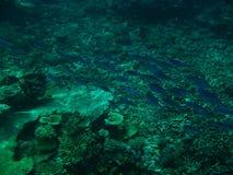 O grande recife de barreira Imagens de Stock