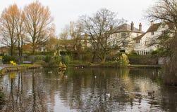 O grande santuário da lagoa e das aves de caça do pato em Ward Park no condado de Bangor para baixo em Irlanda do Norte Imagens de Stock Royalty Free