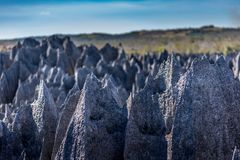 O grande Tsingy de Bemaraha de Madagáscar na reserva natural de Tsingy de Bemaraha Integral do UNESCO Imagem de Stock