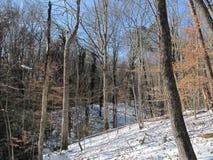 O Greenway em Winter2 Fotografia de Stock Royalty Free