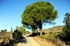 O greenway Los Molinos del Água em Valverde del Camino, província de Huelva, Espanha Fotos de Stock Royalty Free