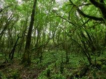 O grosso da floresta verde em um dia nebuloso fotos de stock