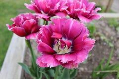 O grupo cor-de-rosa Foto de Stock Royalty Free