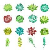 O grupo da ilustração do vetor de planta carnuda e de cacto verdes floresce Opinião superior de plantas de deserto isolada no fun ilustração stock