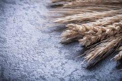 O grupo das orelhas douradas do trigo e do centeio fecha-se acima da vista Fotografia de Stock