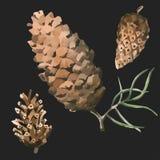 O grupo de aquarela pintado e de mão tirada cobriu o desenho de cones do pinho Foto de Stock Royalty Free