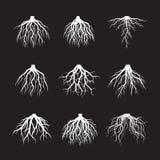 O grupo de branco enraíza a árvore no fundo preto ilustração stock